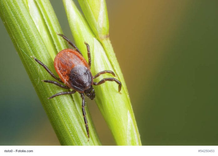 Tick On Straw Image