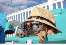 Pug Relaxing Image