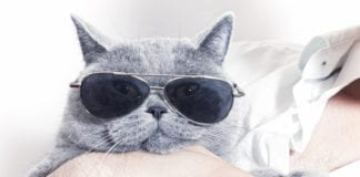 Cat With Glasses Image