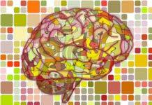 Brain Illustration Image