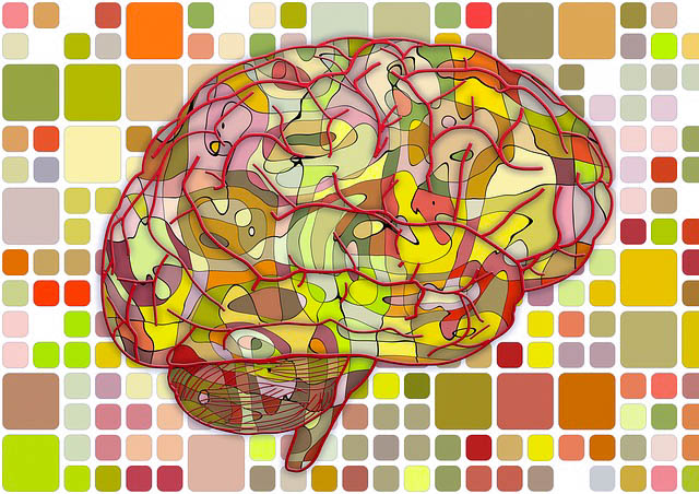 Brain Illustration Image