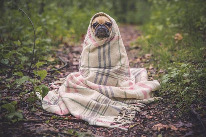 Funny Dog Image