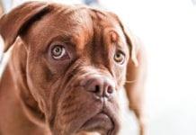 Shelter Dog Image