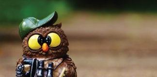 Crazy Owl Image