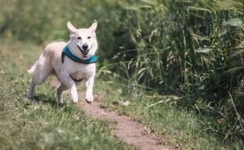 Dog Running Image