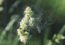 Plant-Pollen-Image