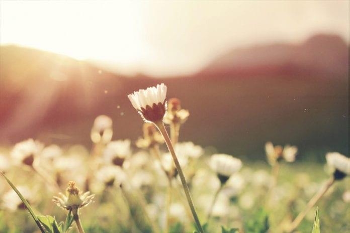 Sunrise_Image