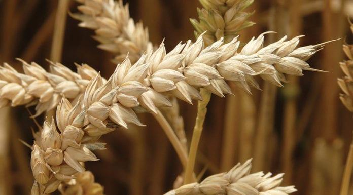 Whole_Grains_Image