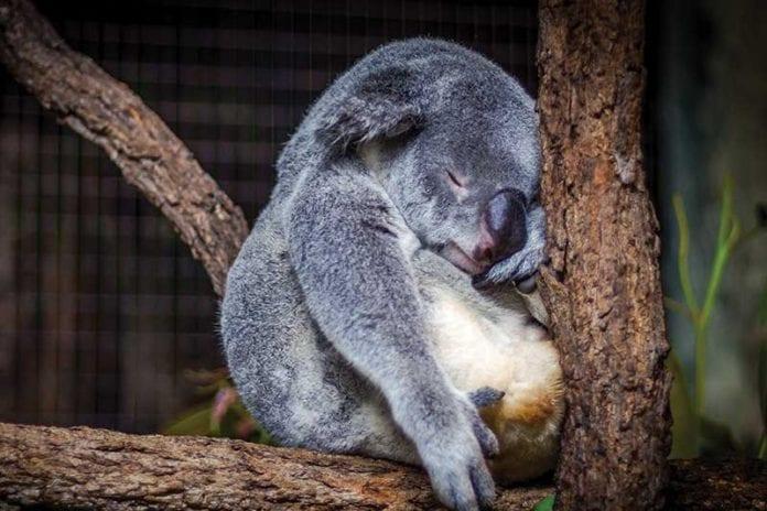 Sleeping_Image
