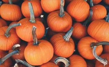 Pumpkins_Image