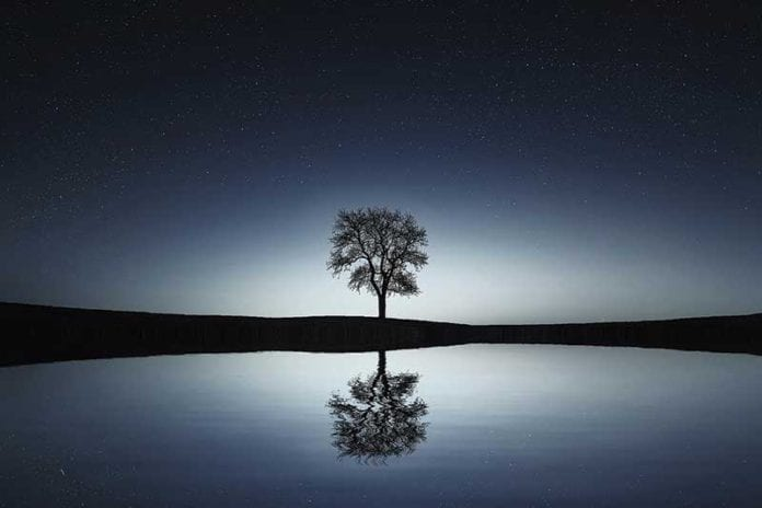 Inspirational_Tree_Image