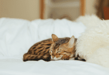 """Small kitten sleeping on white fluffy bed"""