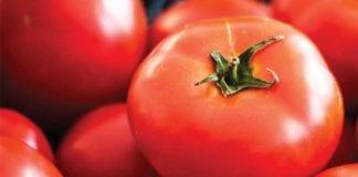 Tomato_Image