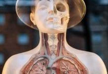 Anatomy_Image