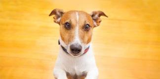 Happy_Dog_Image