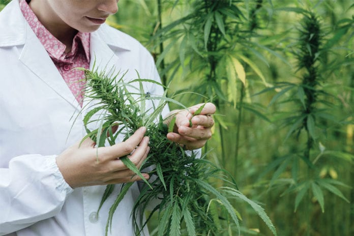 Doctor_Marijuana_Image