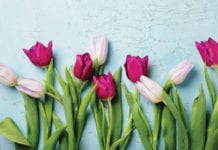 """""""Tulips on a blue background"""""""