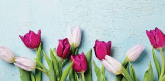 """Tulips on a blue background"""
