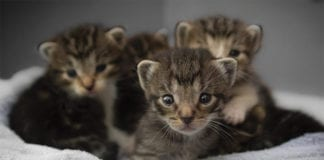 """Group of infant kittens"""