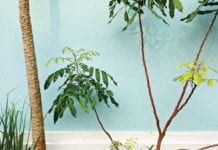 """Tropical plants with a light blue background"""