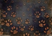 """Tan paw-prints on a dark background"""