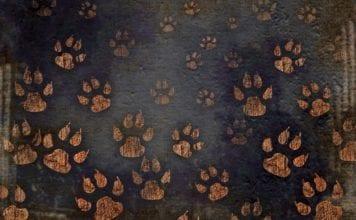 """Tan paw-prints on a dark background"""