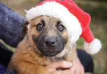 """Crazy dog in Santa hat"""