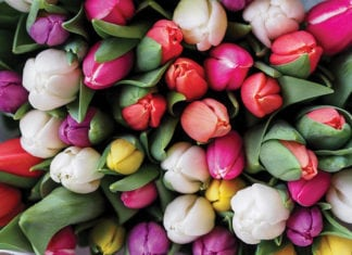 """""""Pile of tulips"""""""
