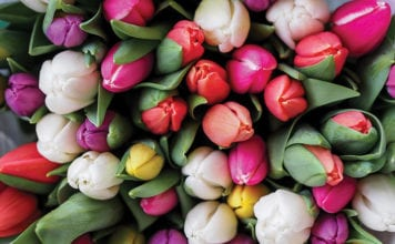 """Pile of tulips"""