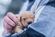 """""""Tiny Puppy"""""""