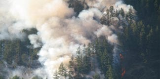 """Forest fire smoke"""